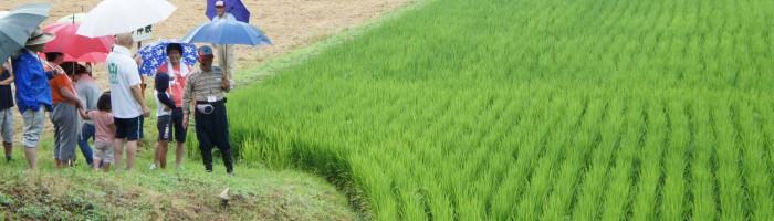 米づくり泥んこ体験2-13