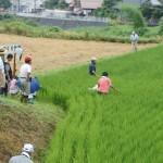 米づくり泥んこ体験2-12