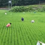 米づくり泥んこ体験2-10